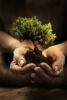 Plantons pour la planète