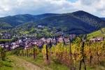 Fribourg, sur la route des vins
